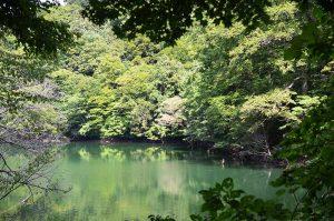 水の力を育む白神山地