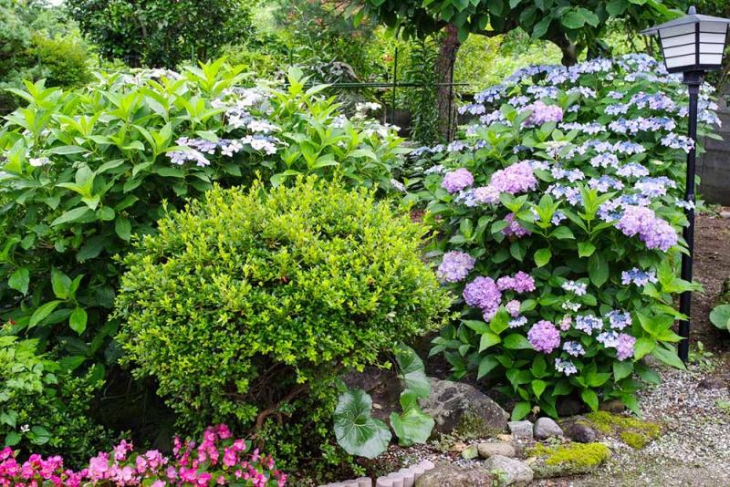 自然生活館の庭の写真