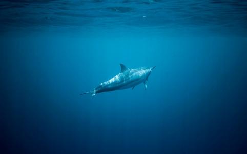 海中のイルカ