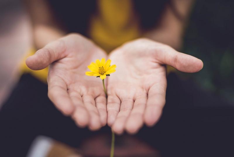 手と花の写真