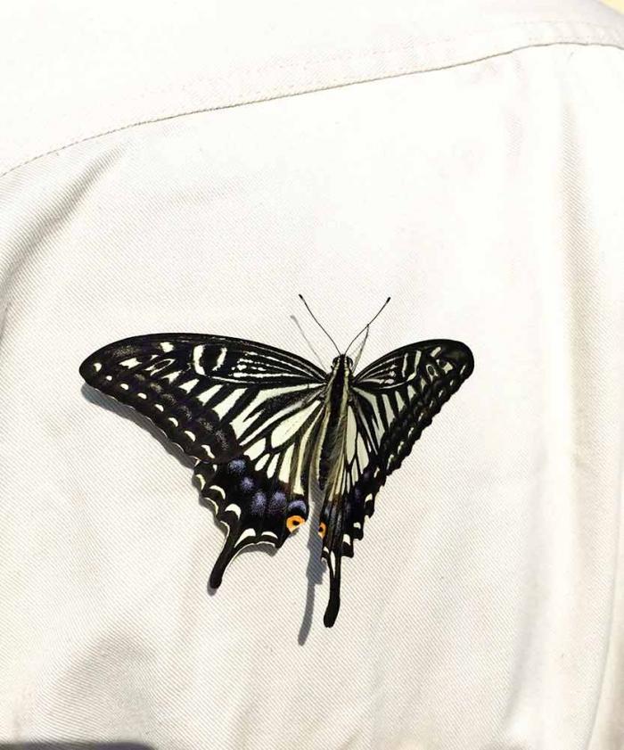 背中にとまるアゲハ蝶