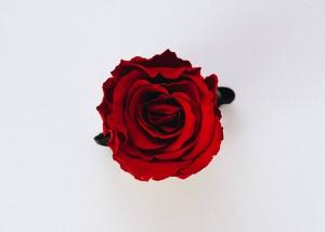 【魂の救済-3】日本国旗の真理