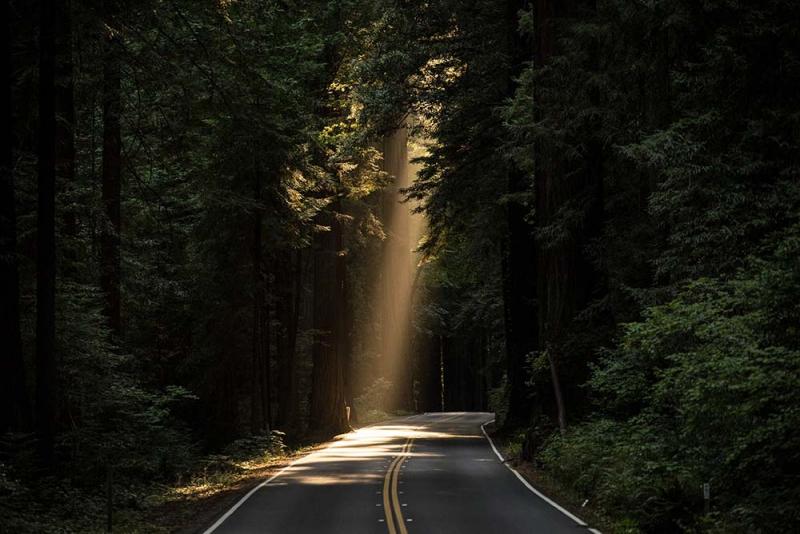 光がさす小道