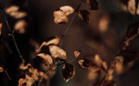 枯葉の画像