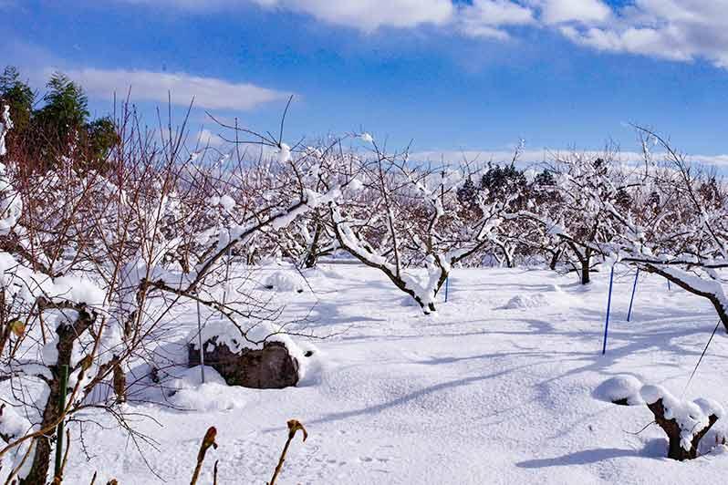 お正月の庭