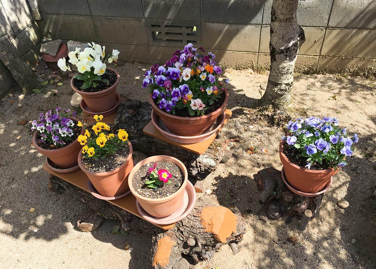花の鉢植え